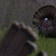 bow hunting turkeys tips Raised Hunting